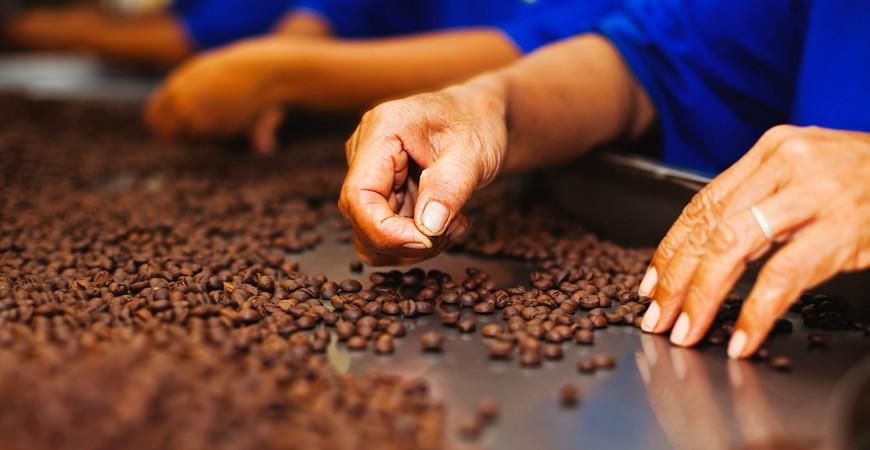 Una bacca e due leggende: le origini misteriose del caffè.